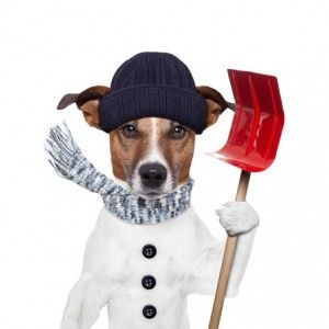 auto remotes - winter dog shovel snow
